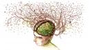 Как мозъчните процеси помагат да усвоите нов навик