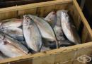Избягвайте консумацията на тези 9 вида риби