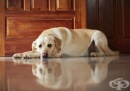 Как да оставим кучето само у дома, без проблеми?