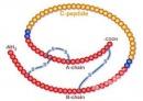 C-пептид