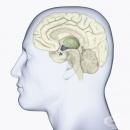 Антидиуретичен хормон