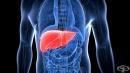 Изследване на черен дроб