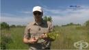 Доцент Илия Желев - Лечебните свойства на комунигата и лавандулата