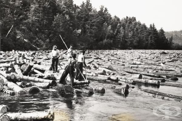 Кормчии на дънери - те трябвало да навигират отсечените дънери до най-близкия пристан
