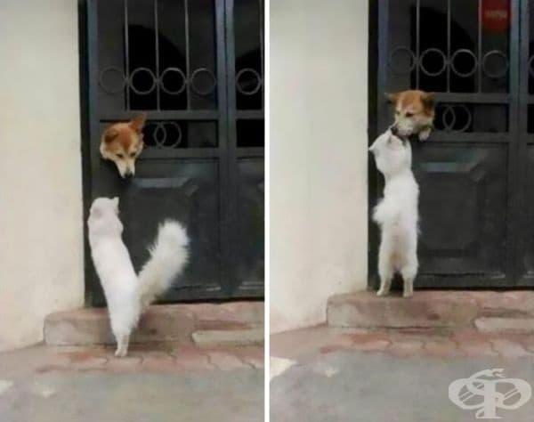 Тя идва тук всеки ден, за да го целуне и да си отиде.