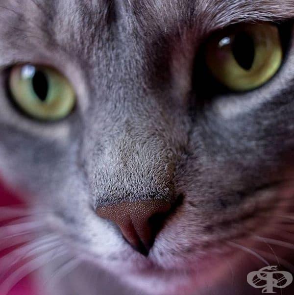 Котките имат уникални носове. Точно както хората имат уникални пръстови отпечатъци, котките могат да бъдат идентифицирани по уникалните хребети по носовете им.