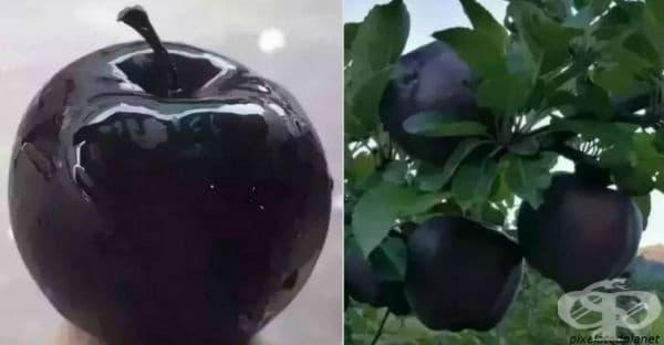 Черни ябълки Диамант се предлагат на пазара, но никой не ги желае
