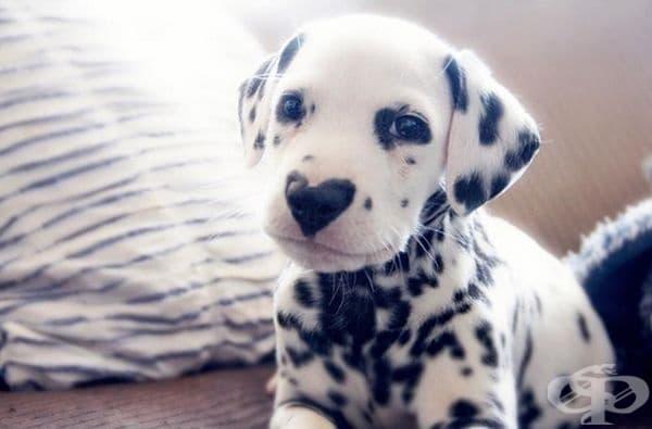 Запознайте се с Уайли - кучето, целунато от природата.