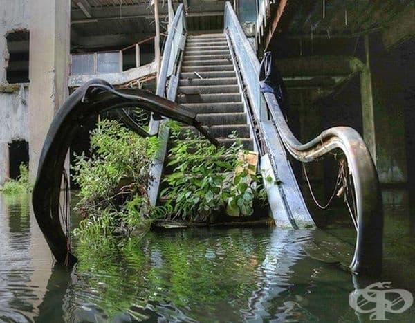 Растенията са единствените, които могат да изкачат тези стълби.