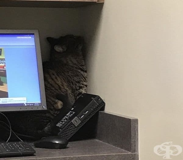 """""""Нашата котка след посещение при ветеринар - предполагам, че знаете как е минало."""""""