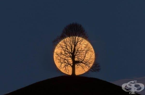 Дърво на фона на пълнолуние.