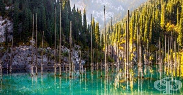 """Мястото е известно още като """"Потъналата гора"""", поради стърчащите стволове на вековни смърчове, показващи се от водите на езерото."""