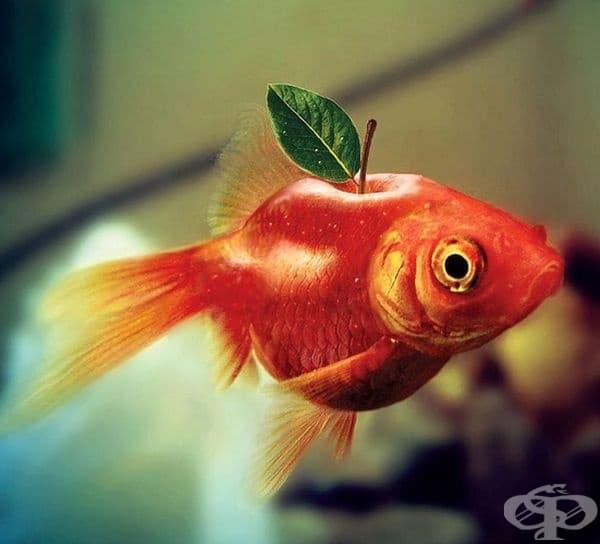 Рибоябълка.