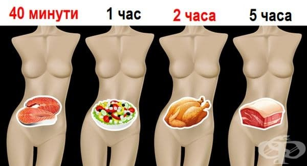 Колко време се обработва храната в стомаха и защо е важно да знаете това