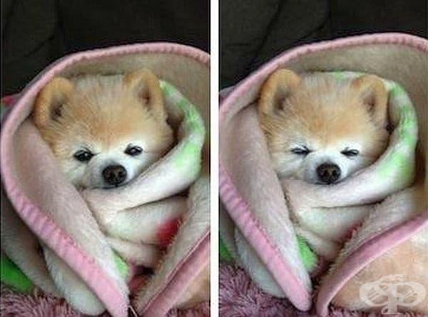 Кучетата могат да се преструват, че са болни, за да получат повече внимание.