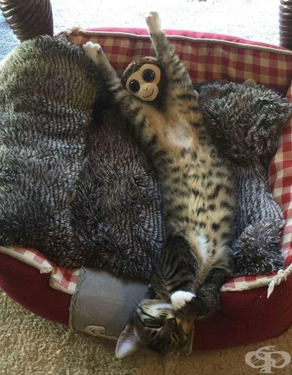 Каква сладка и щастлива маймуна! О, това всъщност е котка!