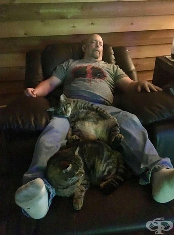 """""""Една от котките ми спи точно като съпруга ми. И двамата заспиват пред телевизора."""""""