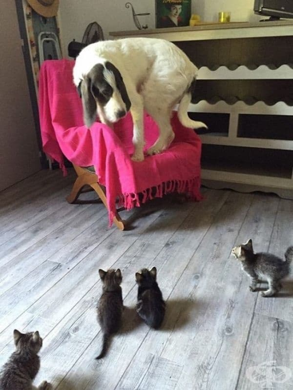 Той среща малки котки за първи път.