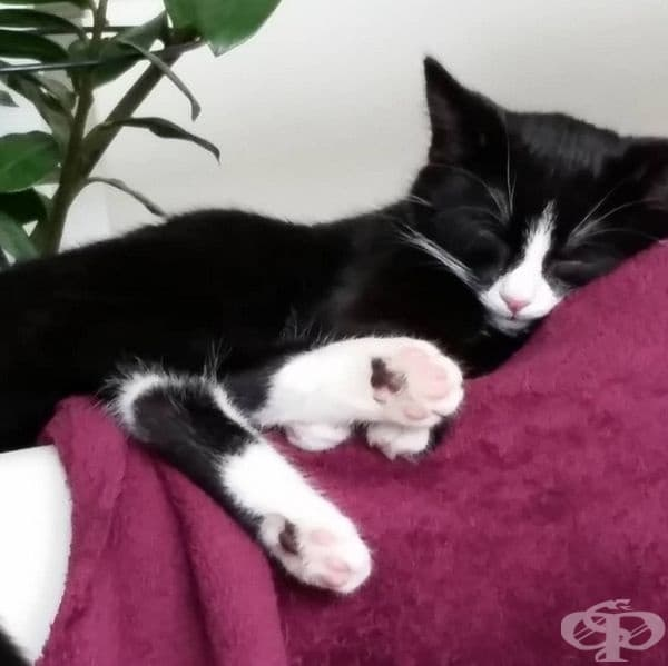Млада жена прибира от улицата две черно-бели котенца на по 4 месеца.