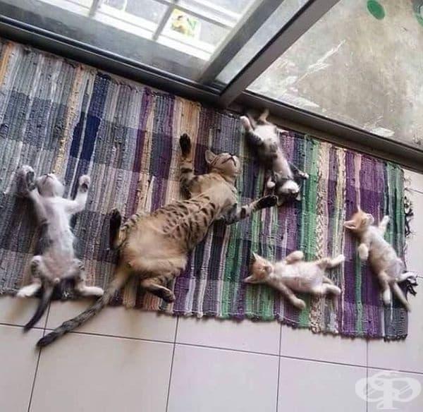 Семейство котки на припек.
