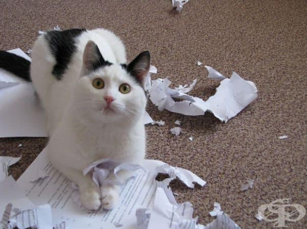 20 снимки на пакостливи котета - изображение