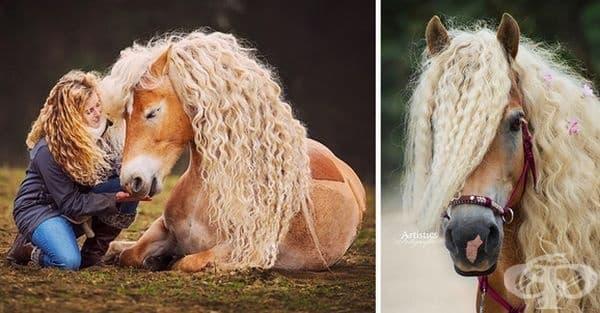 Името на този кон е Буря. Той е порода Хафлингер.
