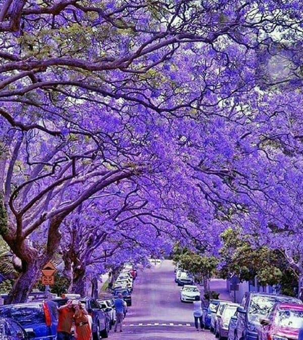 Претория, Южна Африка.