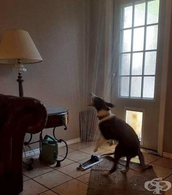 Кучето на съседа довлече вкъщи поливната система.