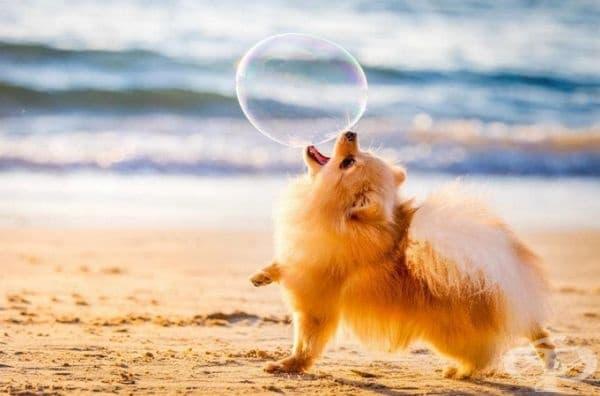 """Победител в категорията """"Кучета в игра"""". Фотограф: Елинор Ройзман."""
