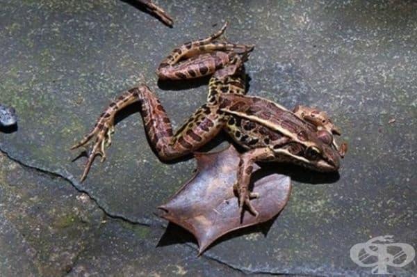 През 1997 г. в един мексикански град не само вали дъжд от жаби, но се разразява цяла буря от тях.