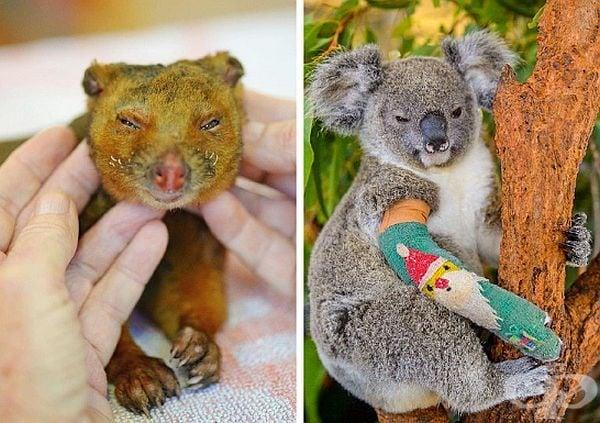 Семейство Ървин спаси 90 000 ранени животни от пожарите в Австралия.