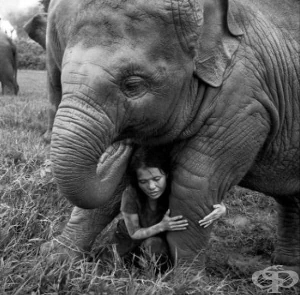"""Категория """"Връзката между човека и животните""""."""