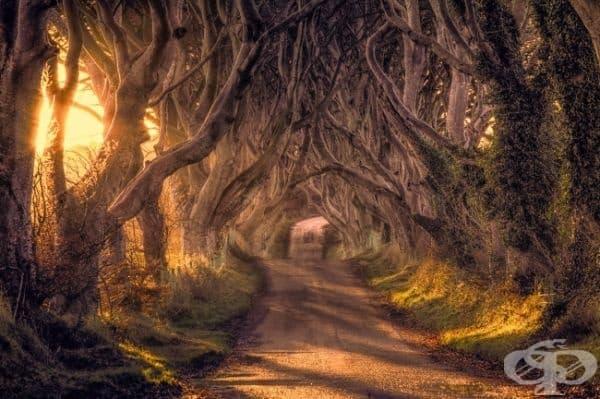 Dark Hedges, Великобритания