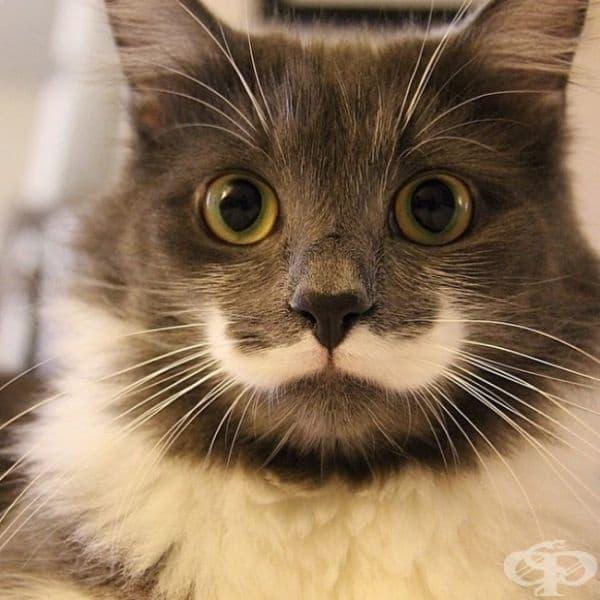 Котката на Еркюл Поаро.