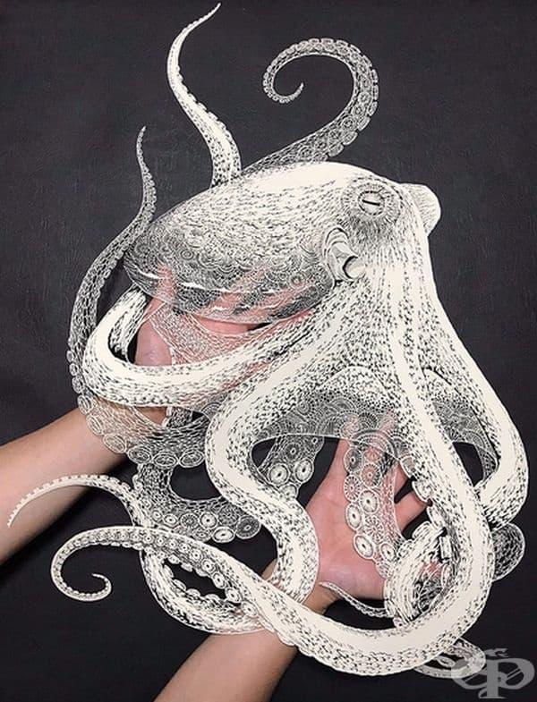 Октоподът е толкова прецизен и подробен, че човек може да се обърка с рисунка с бял писец.