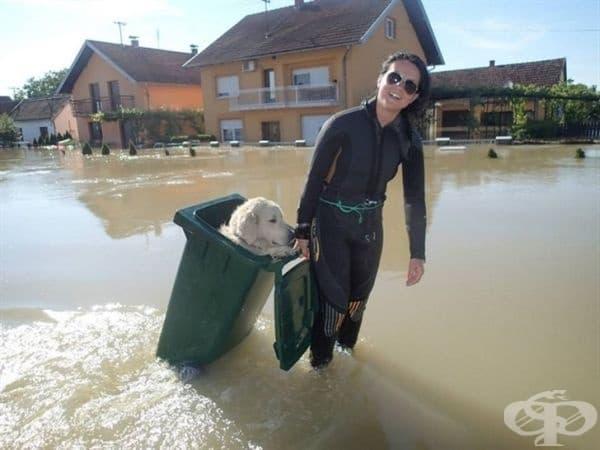 Жена спасява куче от наводнена улица.