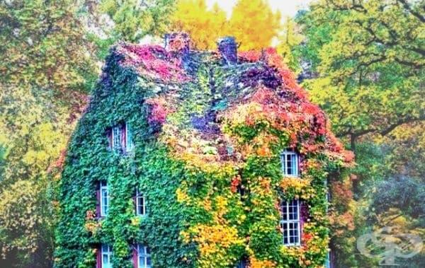 Зелената/цветна къща, Гисен, Германия.
