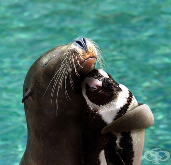 Тюлен и пингвин в прегръдка.