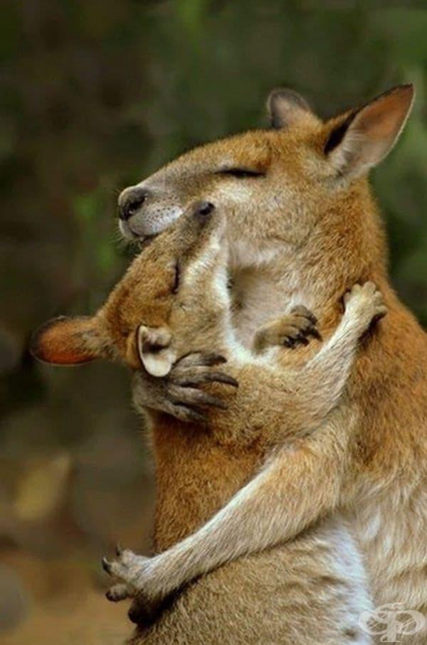 Няма нищо по-добро от топла майчина прегръдка.