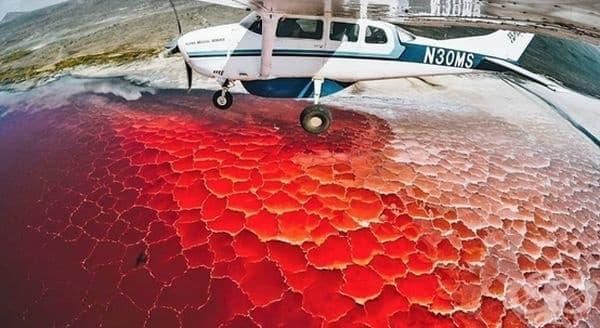 """Езерото """"Натрон"""" е покрито с кора от сол. Цветът се дължи на микроорганизмите, които живеят там."""