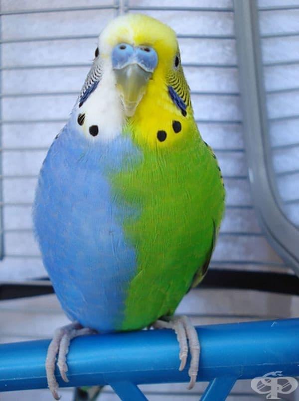 Папагал - наполовина син, наполовина зелен.