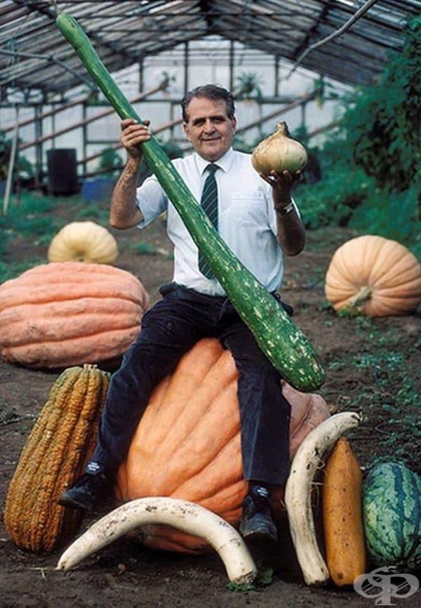 Бърнард Ливера е известен с 12 от най-големите световни постижения в отглеждането на зеленчуци – гиганти. Запознайте се с царевичните кочани с рекордна дължина, брюкселско зеле, чийто размер е несравним и най-голямата глава от зеле с тегло 55 кг.