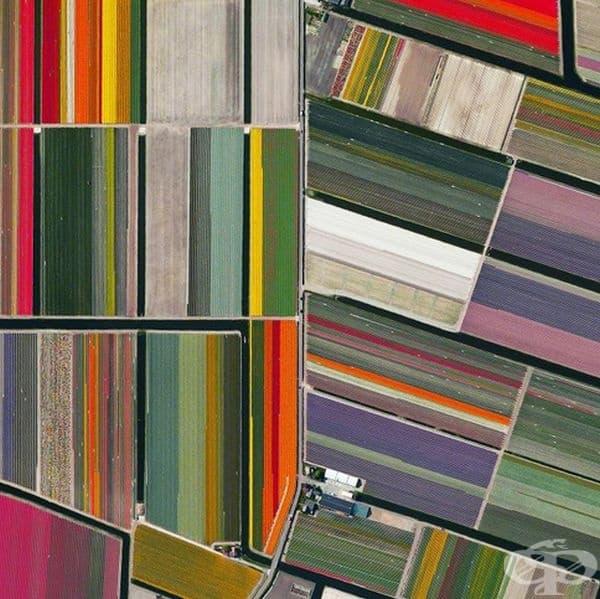 Цветните полета на лалета в Лисе, Холандия.