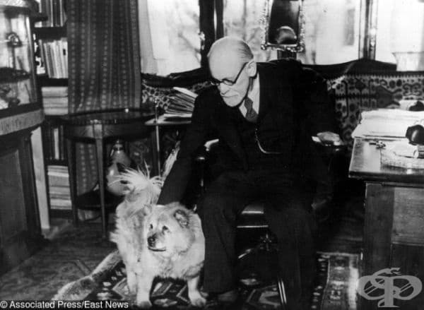 Фроид смята, че кучетата могат да разпознаят истинското настроение на човек както никой друг и да го накарат да се отпусне. Поради тази причина той позволява на своето чау-чау, Джофи, да присъства на терапевтичните му сесии.