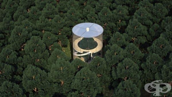 Сградата е проектирана така, че да бъде изградена в гората, без да вреди на околните дървета.