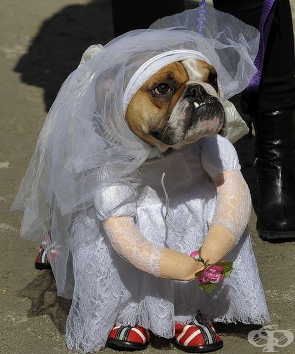 Къде е младоженецът?
