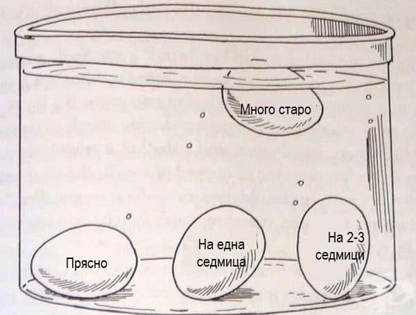 Ето как може да разберете колко са свежи яйцата. Просто ги поставете в нормална вода и вижте тяхното разположение в съда.