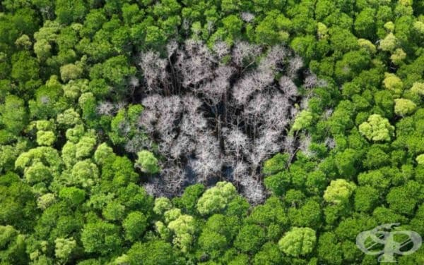 Ето какво се случва, когато мълния удари гората.