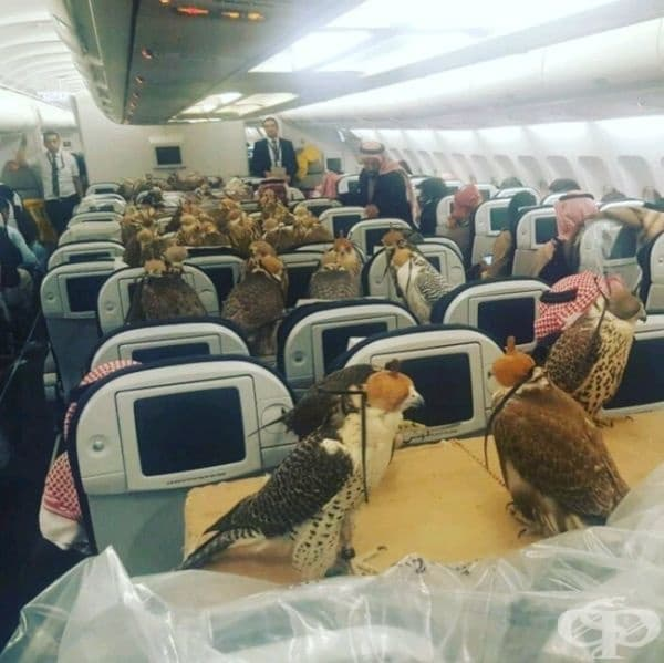 Нищо особено... Просто принцът на Саудитска Арабия резервира 80 места за своите ястреби.