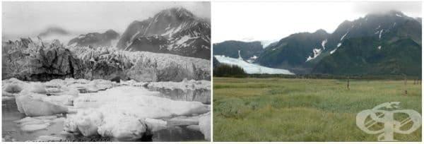 Ледник Педерсен, Аляска (лятото на 1917 - лятото на 2005).